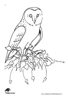 Uilen Kleurplaat Printen Spreekbeurten Valkenier Schrieken Roofvogel